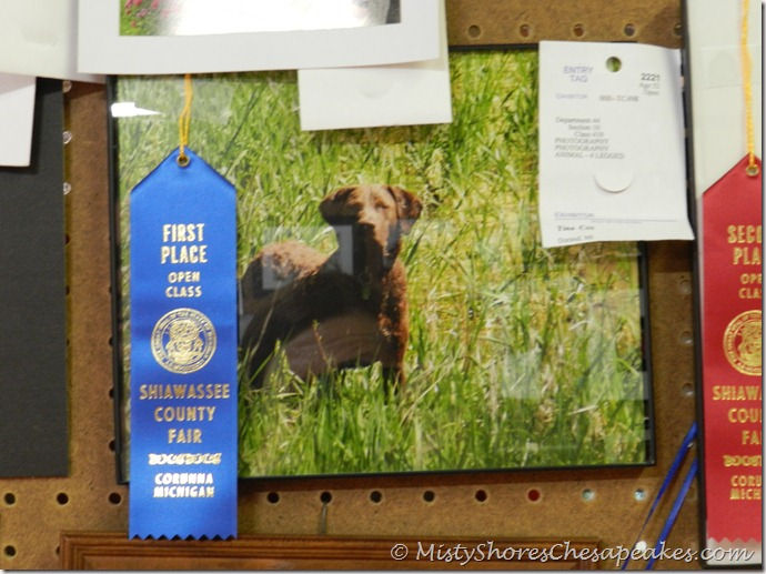 Blue Ribbon award for my photo of Bitsy!